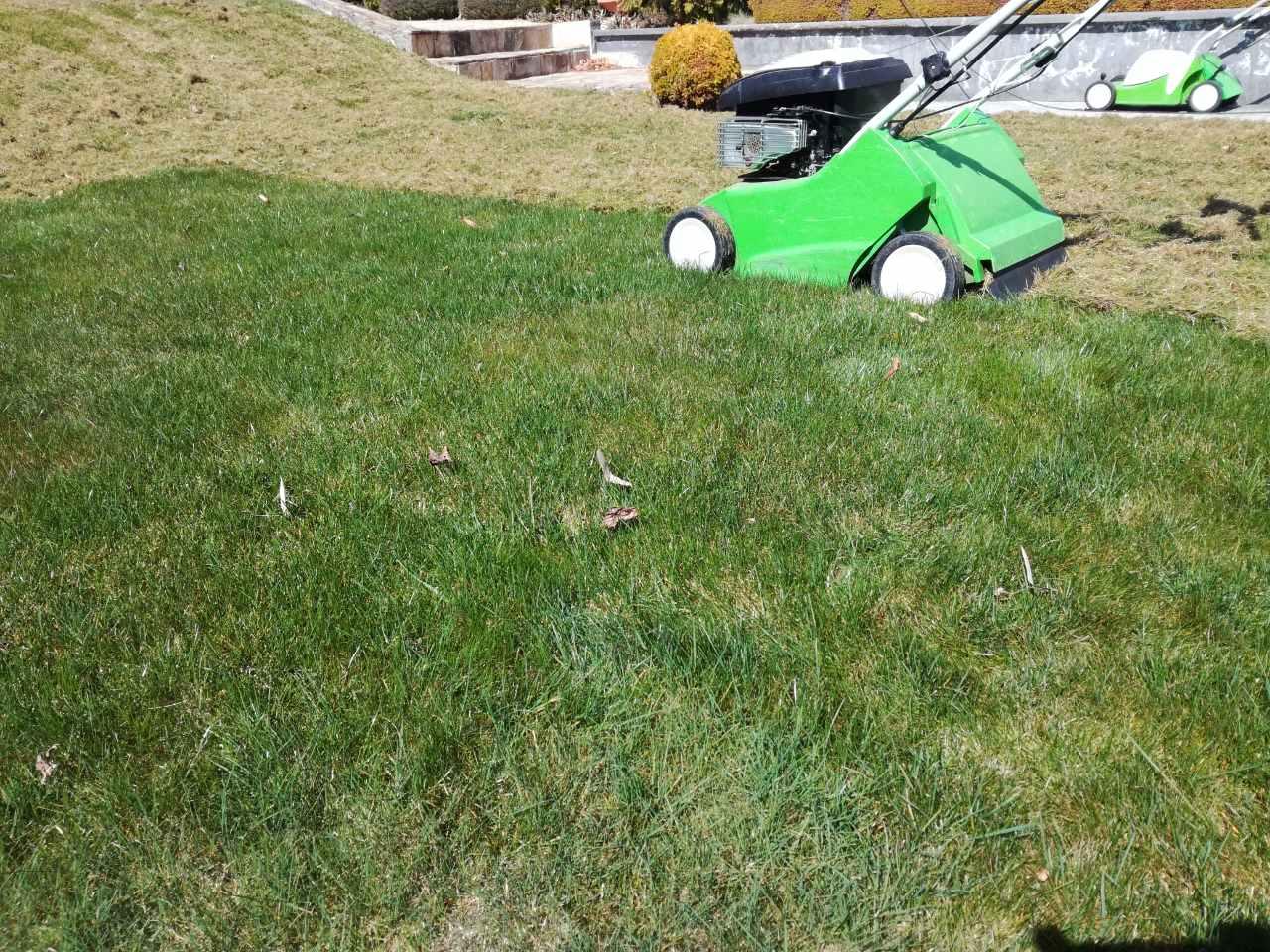 Суха трева